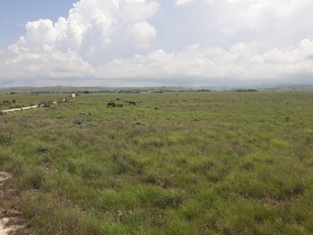 Bukit Mamboro di sumba tengah
