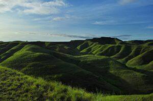 Bukit Tenau yang diselimuti rumput hijau. Foto: instagram/fikanindya