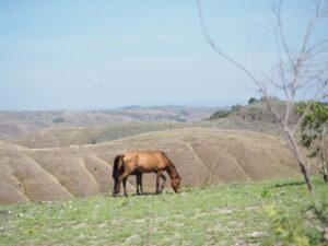 Kuda merumput di Bukit Tanarara. Foto: Google Maps / Dicky Ferlanda