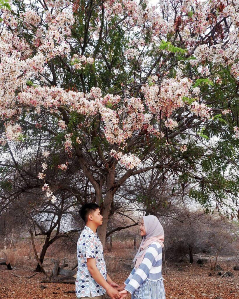 Lokasi Bunga Sakura Sumba