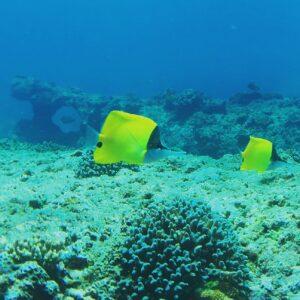 Menyelam di sekitar Sumba Adventure Resort. Foto: Google Maps / Sumba Adventure Resort