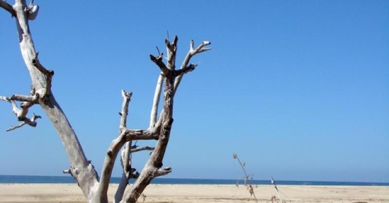 Pantai Pahiwi