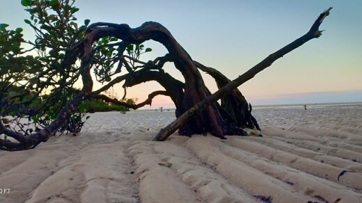 Pasir putih di Pantai Meti Ai di Sumba Timur. Foto: Google Maps / Marvel Ol Shop Jaya