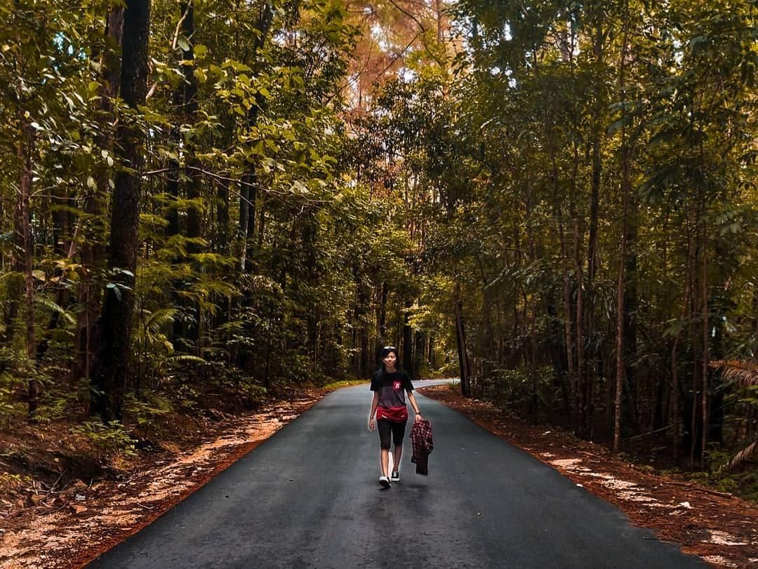 Hutan Tandaru
