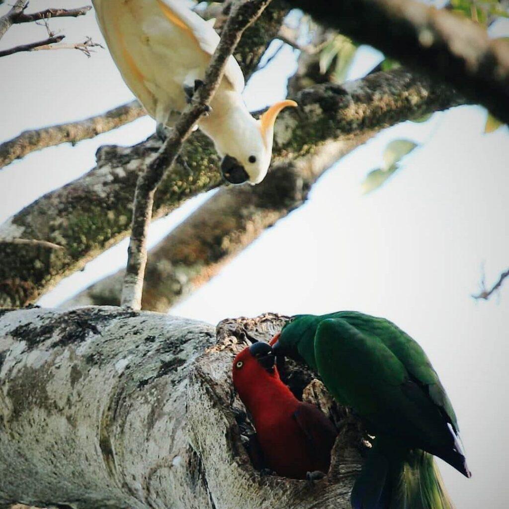 Burung di Taman Nasional Matalawa